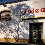 Barbadillo garantiza a sus viticultores la compra de uva en esta vendimia